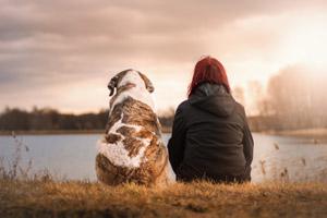犬の幸せ.com